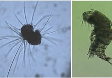 THE IMPORTANCE OF ZOOPLANKTON ANALYSIS