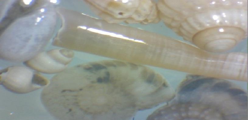 Macrobenthos
