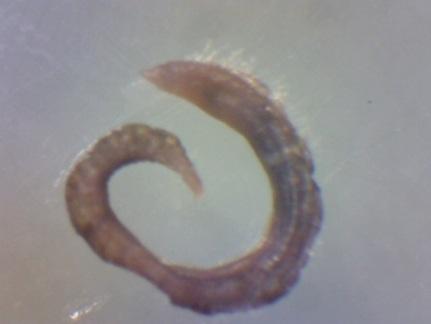 Macrobenthos2